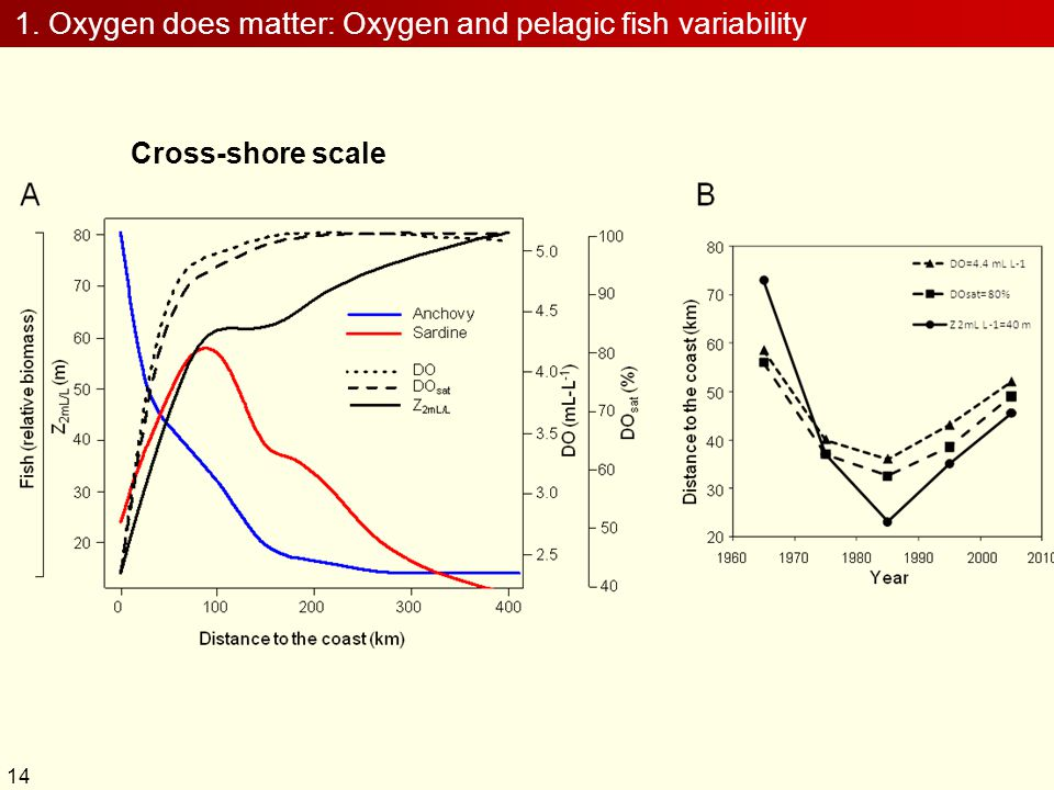 1. Oxygen does matter: Oxygen and pelagic fish variability Cross-shore scale 14