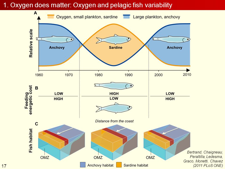 1. Oxygen does matter: Oxygen and pelagic fish variability 17 Bertrand, Chaigneau, Peraltilla, Ledesma, Graco, Monetti, Chavez (2011 PLoS ONE)
