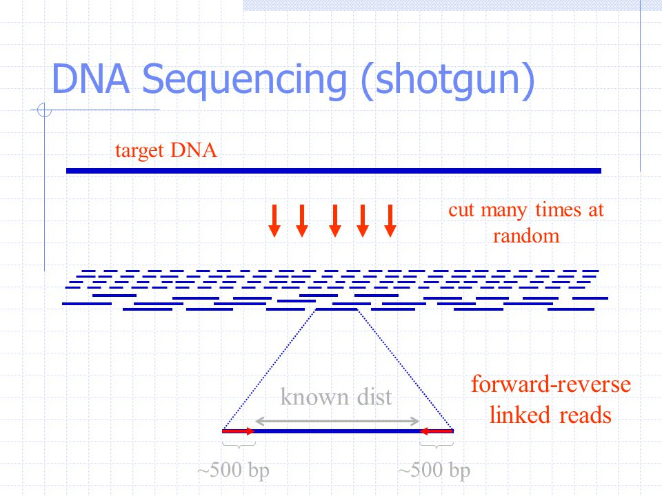 DNA Sequencing (shotgun) cut many times at random known dist forward-reverse linked reads ~500 bp target DNA