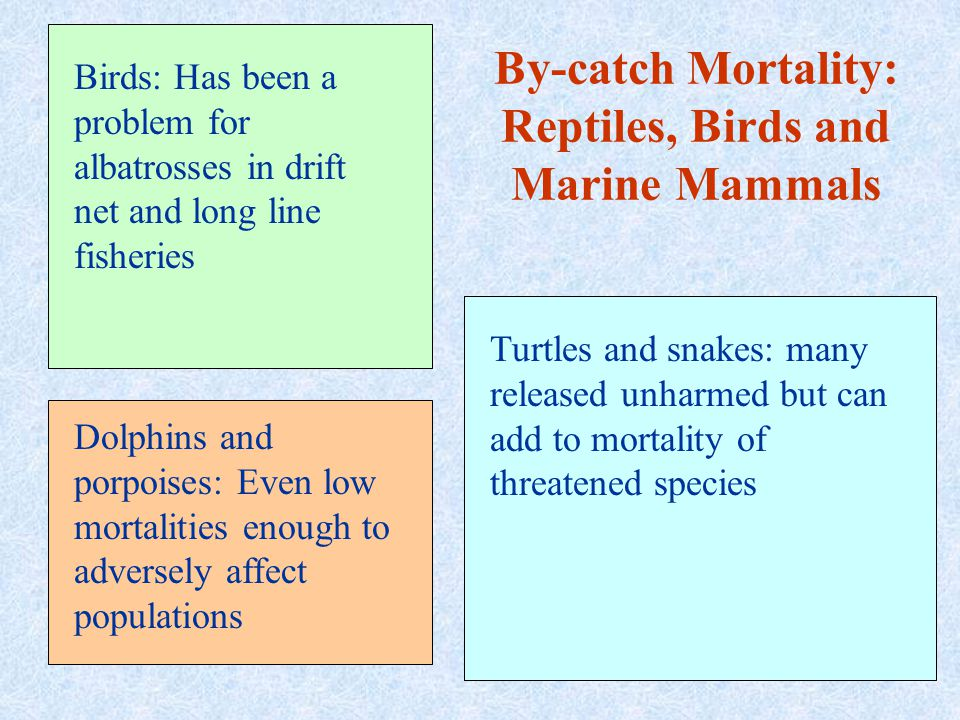 By-catch Mortality: Reptiles, Birds and Marine Mammals Birds: Has been a problem for albatrosses in drift net and long line fisheries Dolphins and porpoises: Even low mortalities enough to adversely affect populations Turtles and snakes: many released unharmed but can add to mortality of threatened species