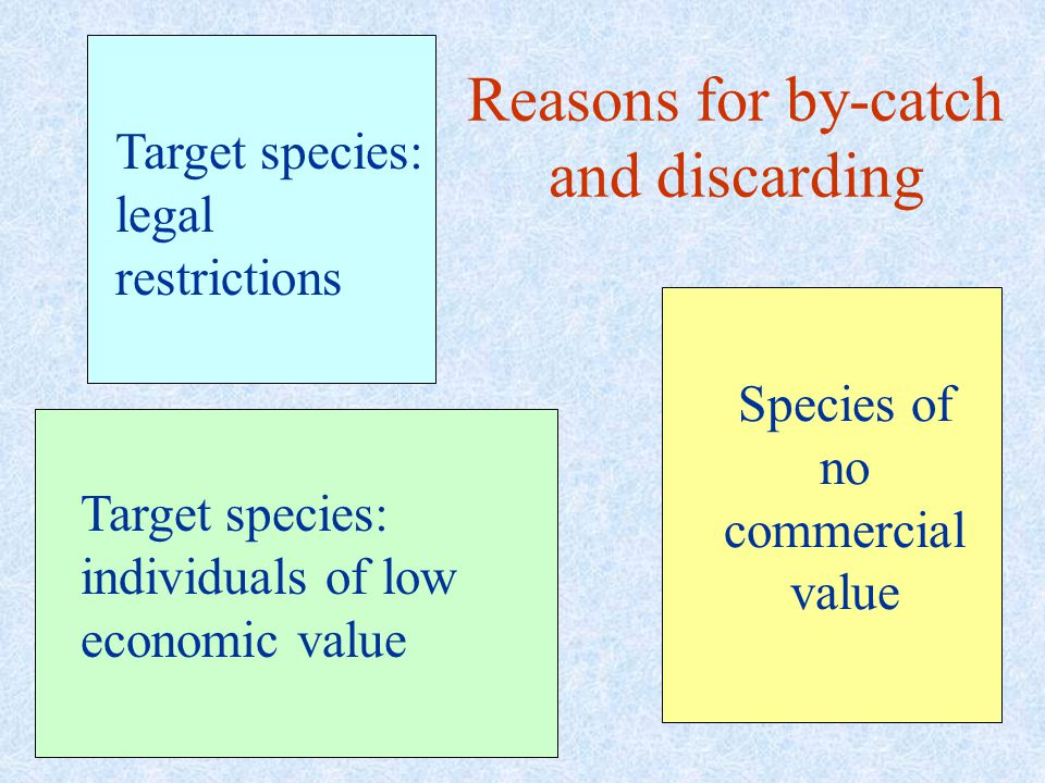 Reasons for by-catch and discarding Target species: legal restrictions Target species: individuals of low economic value Species of no commercial value