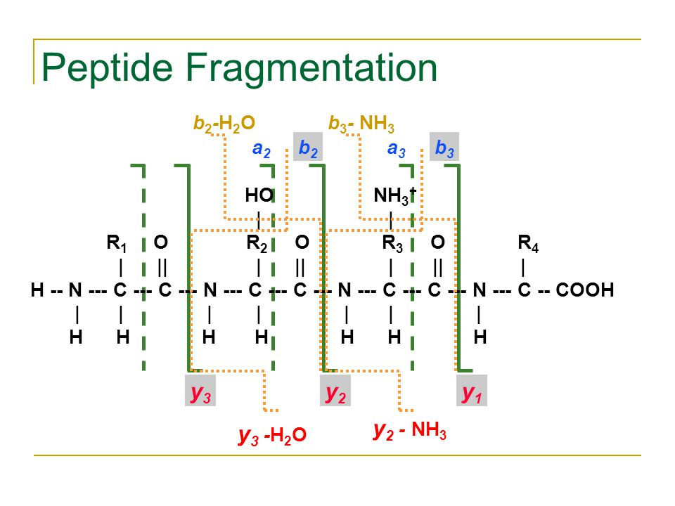 Peptide Fragmentation y3y3 b2b2 y2y2 y1y1 b3b3 a2a2 a3a3 HO NH 3 + | | R 1 O R 2 O R 3 O R 4 | || | || | || | H -- N --- C --- C --- N --- C --- C --- N --- C --- C --- N --- C -- COOH | | | | | | | H H H H H H H b2-H2Ob2-H2O y 3 -H 2 O b 3 - NH 3 y 2 - NH 3