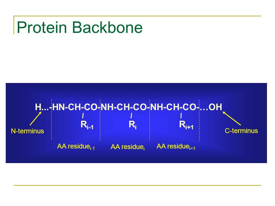 Protein Backbone H...-HN-CH-CO-NH-CH-CO-NH-CH-CO-…OH R i-1 RiRi R i+1 AA residue i-1 AA residue i AA residue i+1 N-terminus C-terminus