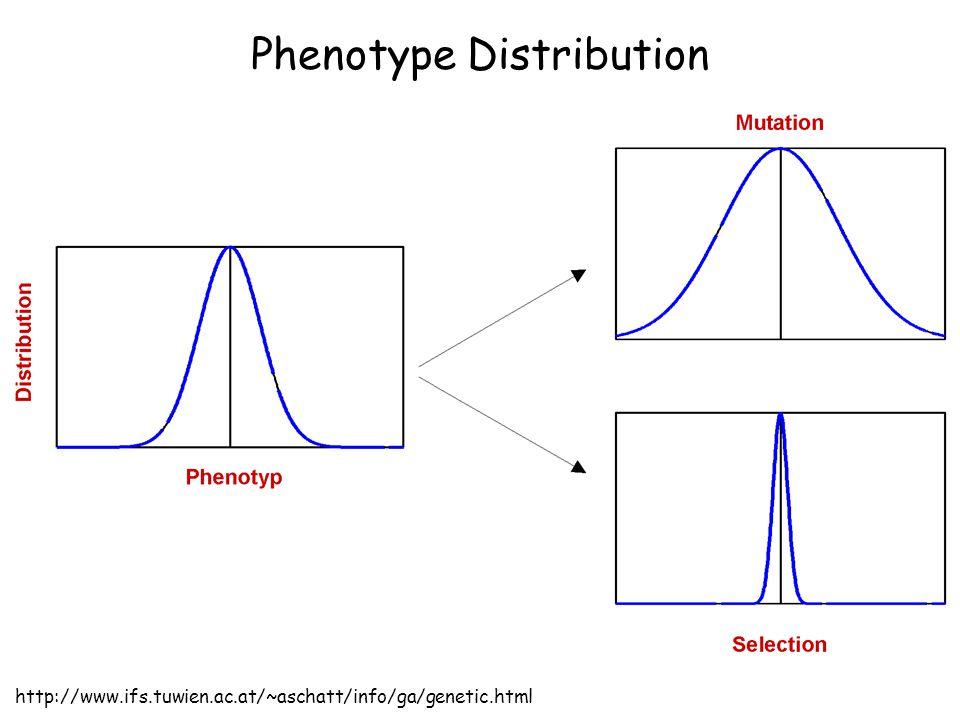 Phenotype Distribution http://www.ifs.tuwien.ac.at/~aschatt/info/ga/genetic.html