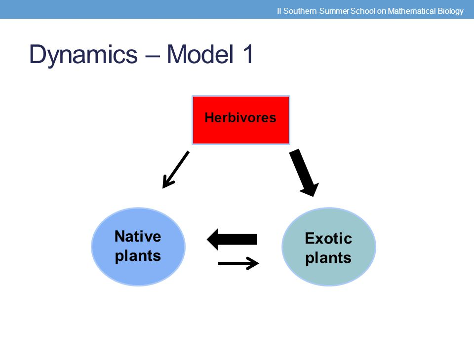 Assumptions Natives and Exotics - different growth rates Herbivore rates are different for exotics and natives Competitive strength is not symmetrical Capture rate (  ), conversion rate (  ), and the parameter D are the same for both species II Southern-Summer School on Mathematical Biology