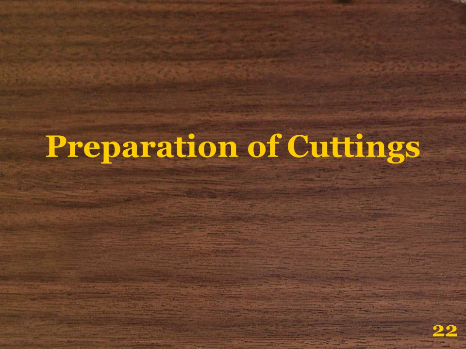 Preparation of Cuttings 22