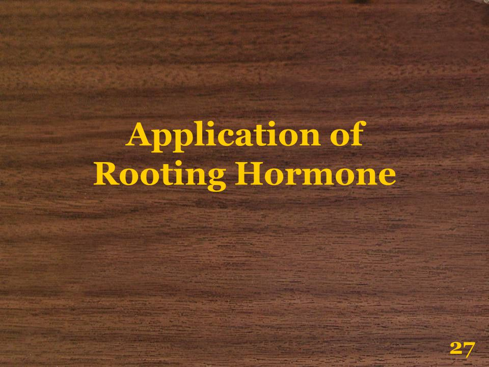 Application of Rooting Hormone 27