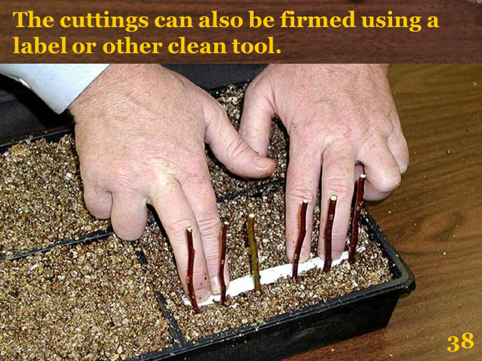The cuttings can also be firmed using a label or other clean tool. 38