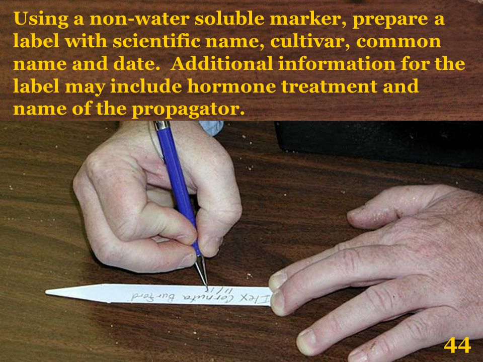 Using a non-water soluble marker, prepare a label with scientific name, cultivar, common name and date. Additional information for the label may inclu