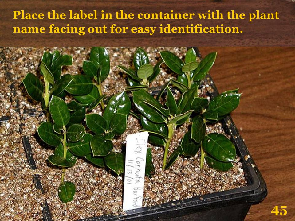 Place the label in the container with the plant name facing out for easy identification. 45
