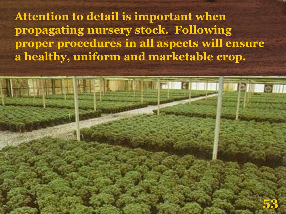 Attention to detail is important when propagating nursery stock. Following proper procedures in all aspects will ensure a healthy, uniform and marketa