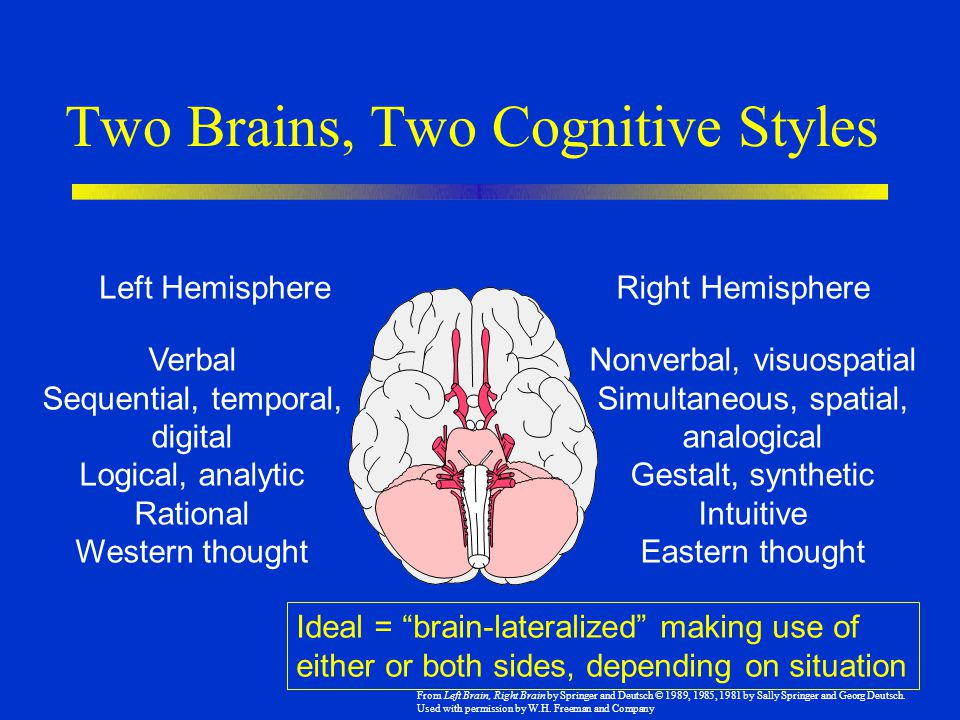 Two Brains, Two Cognitive Styles Left HemisphereRight Hemisphere Verbal Sequential, temporal, digital Logical, analytic Rational Western thought Nonve