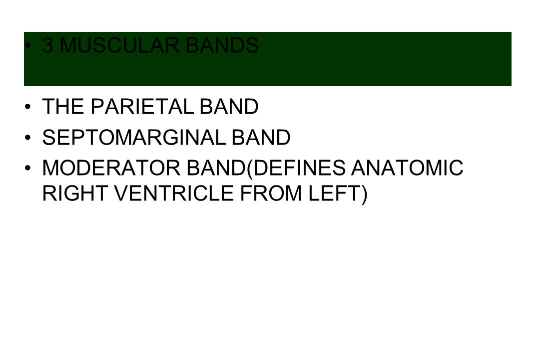 3 MUSCULAR BANDS THE PARIETAL BAND SEPTOMARGINAL BAND MODERATOR BAND(DEFINES ANATOMIC RIGHT VENTRICLE FROM LEFT)