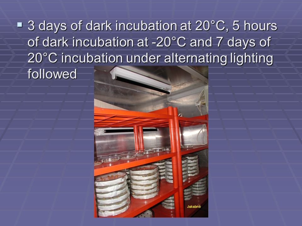  3 days of dark incubation at 20°C, 5 hours of dark incubation at -20°C and 7 days of 20°C incubation under alternating lighting followed Jakabné