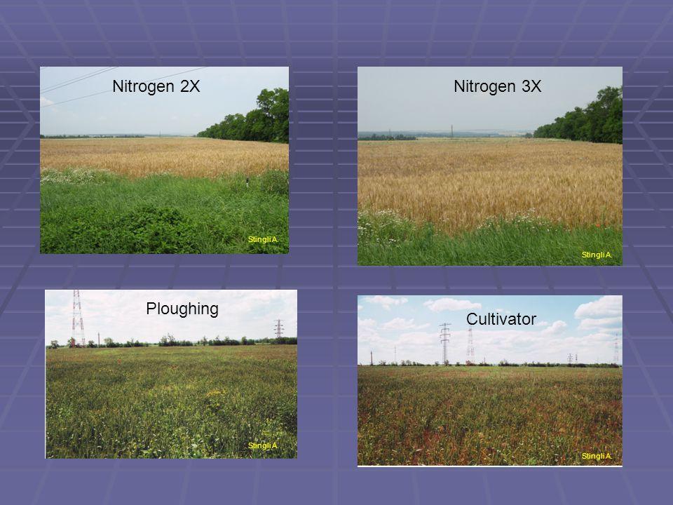 Stingli A. Ploughing Cultivator Stingli A. Nitrogen 2XNitrogen 3X