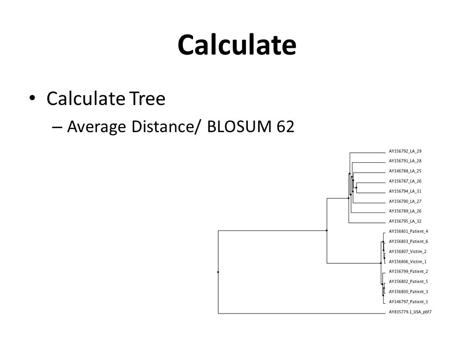 Calculate Calculate Tree – Average Distance/ BLOSUM 62