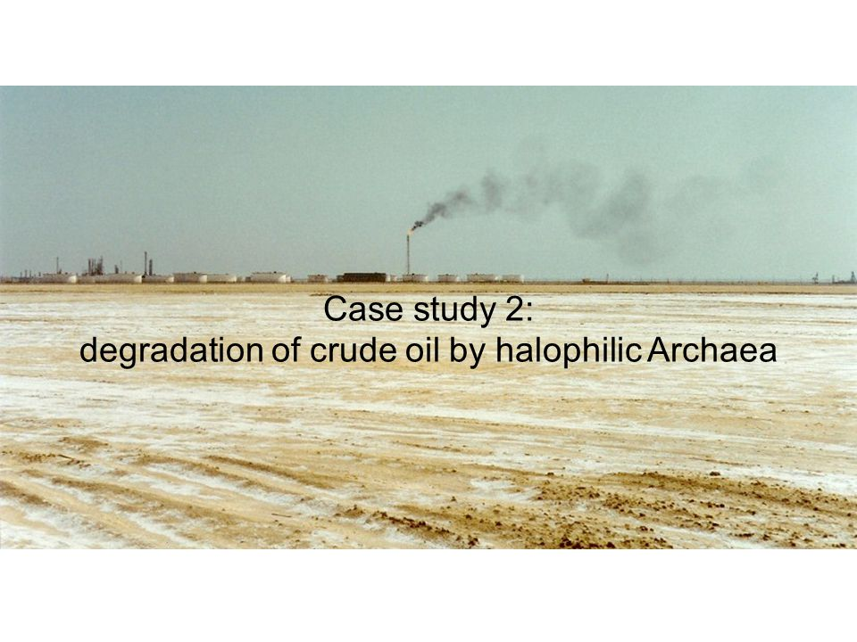 Case study 2: degradation of crude oil by halophilic Archaea
