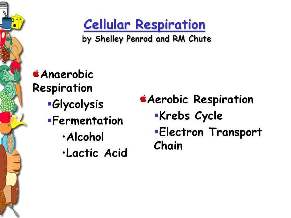 Anaerobic Respiration  Glycolysis  Fermentation Alcohol Lactic Acid Cellular Respiration Cellular Respiration by Shelley Penrod and RM Chute Cellula