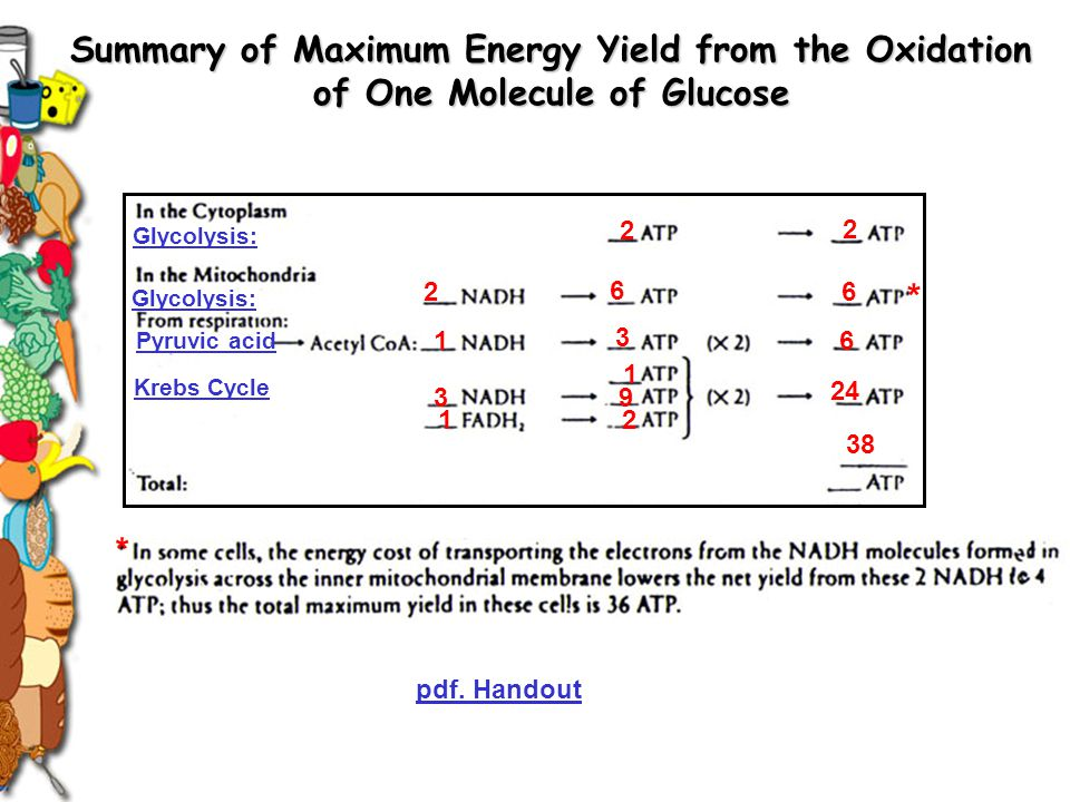 Glycolysis: 2 2 2 6 6 Pyruvic acid Krebs Cycle 3 6 3 1 9 2 1 1 24 38 * * pdf. Handout Summary of Maximum Energy Yield from the Oxidation of One Molecu
