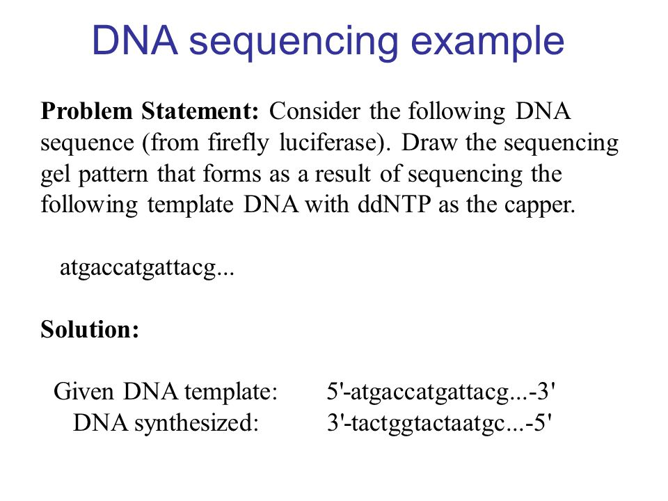 DNA sequencing example Problem Statement: Consider the following DNA sequence (from firefly luciferase). Draw the sequencing gel pattern that forms as