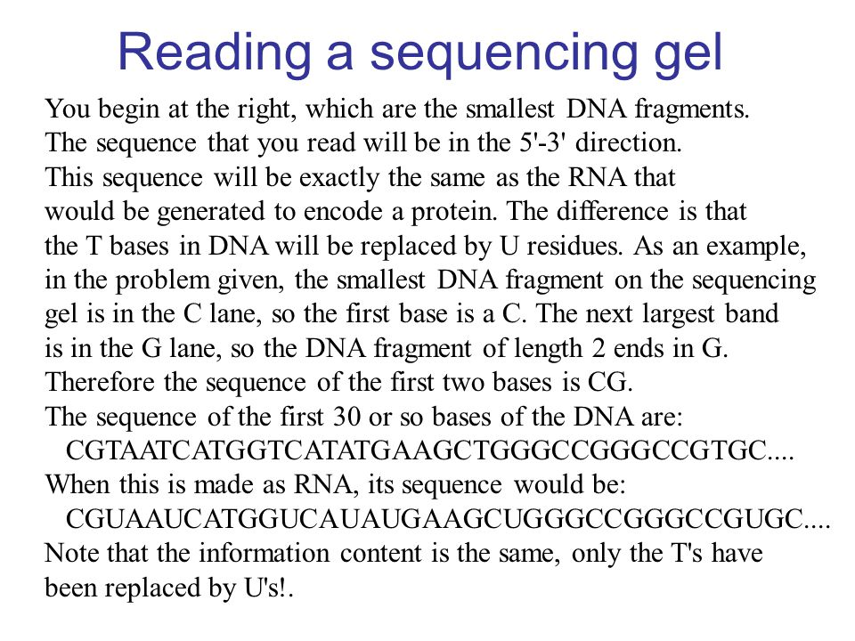 Reading a sequencing gel You begin at the right, which are the smallest DNA fragments. The sequence that you read will be in the 5'-3' direction. This
