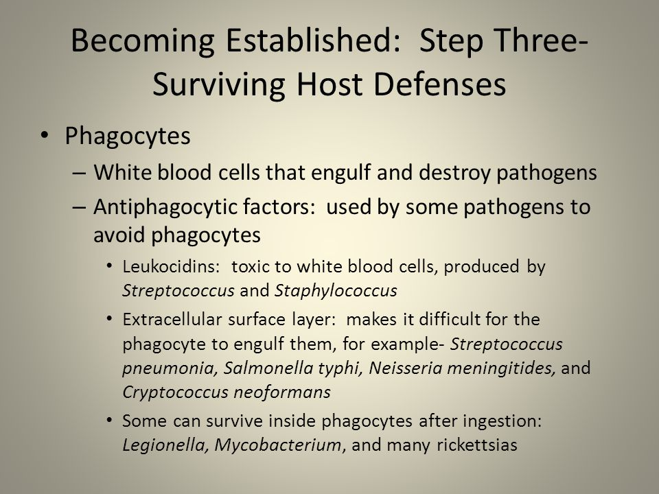 Becoming Established: Step Three- Surviving Host Defenses Phagocytes – White blood cells that engulf and destroy pathogens – Antiphagocytic factors: u