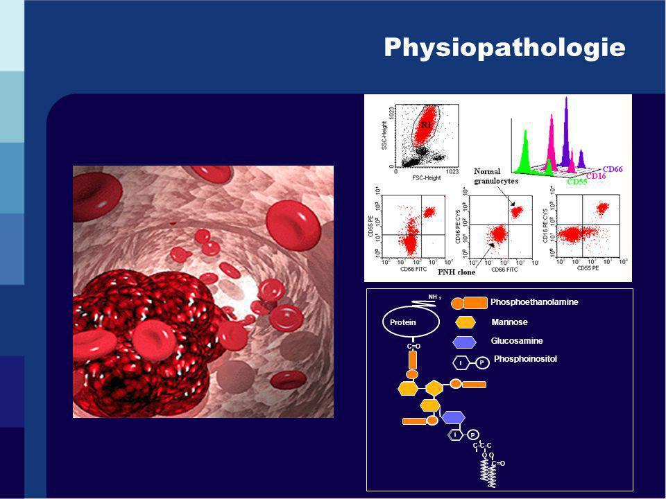 Physiopathologie Phosphoethanolamine P I O C=O C-C-C P C=O NH 2 Protein I Mannose Glucosamine Phosphoinositol