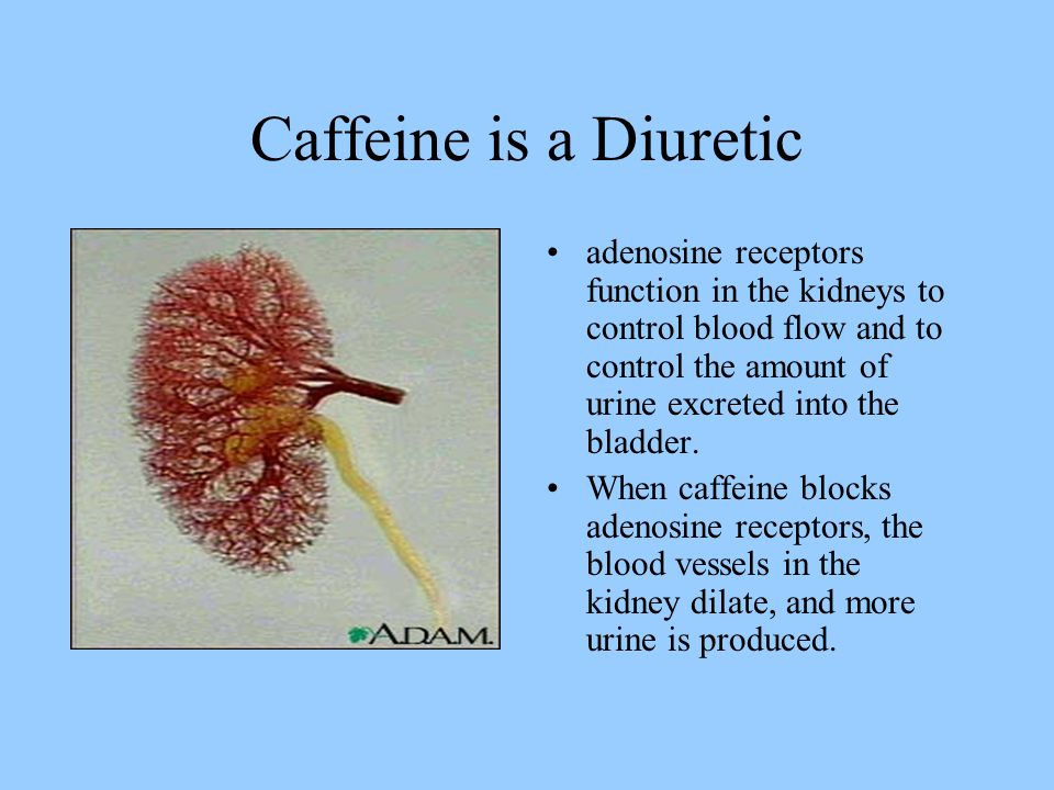 Caffeine is a Diuretic adenosine receptors function in the kidneys to control blood flow and to control the amount of urine excreted into the bladder.