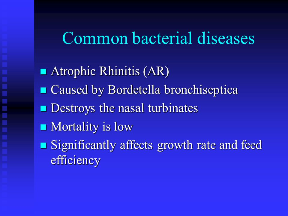 Common bacterial diseases Atrophic Rhinitis (AR) Atrophic Rhinitis (AR) Caused by Bordetella bronchiseptica Caused by Bordetella bronchiseptica Destro