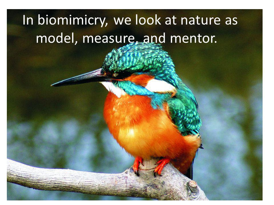 In biomimicry, we look at nature as model, measure, and mentor.