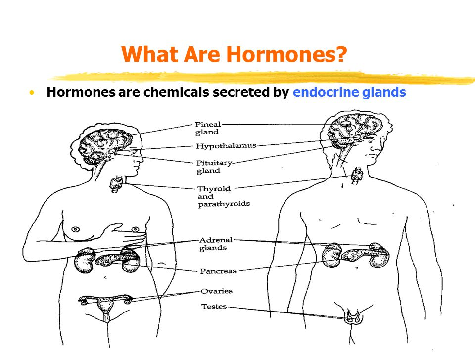 What Are Hormones? Hormones are chemicals secreted by endocrine glands