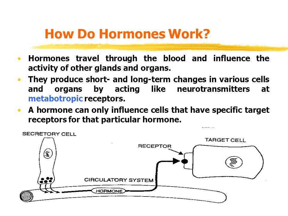 How Do Hormones Work.