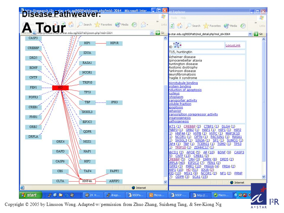 Disease Pathweaver: DPW vs KEGG on Huntington Disease Copyright © 2005 by Limsoon Wong.
