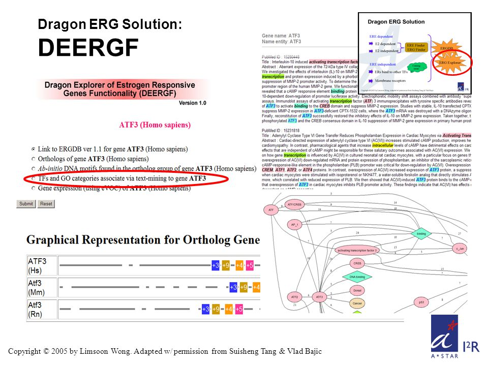 Copyright © 2005 by Limsoon Wong. Adapted w/ permission from Suisheng Tang & Vlad Bajic Dragon ERG Solution: DEERGF