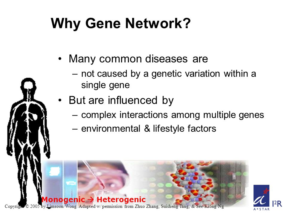 Monogenic  Heterogenic Why Gene Network? Many common diseases are –not caused by a genetic variation within a single gene But are influenced by –comp