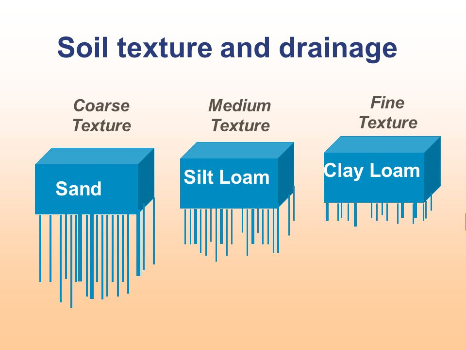 Soil texture and drainage Sand Silt Loam Clay Loam Coarse Texture Medium Texture Fine Texture