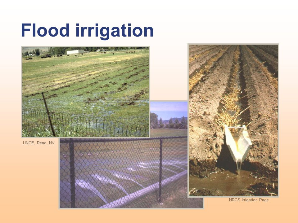 Flood irrigation UNCE, Reno, NV NRCS Irrigation Page