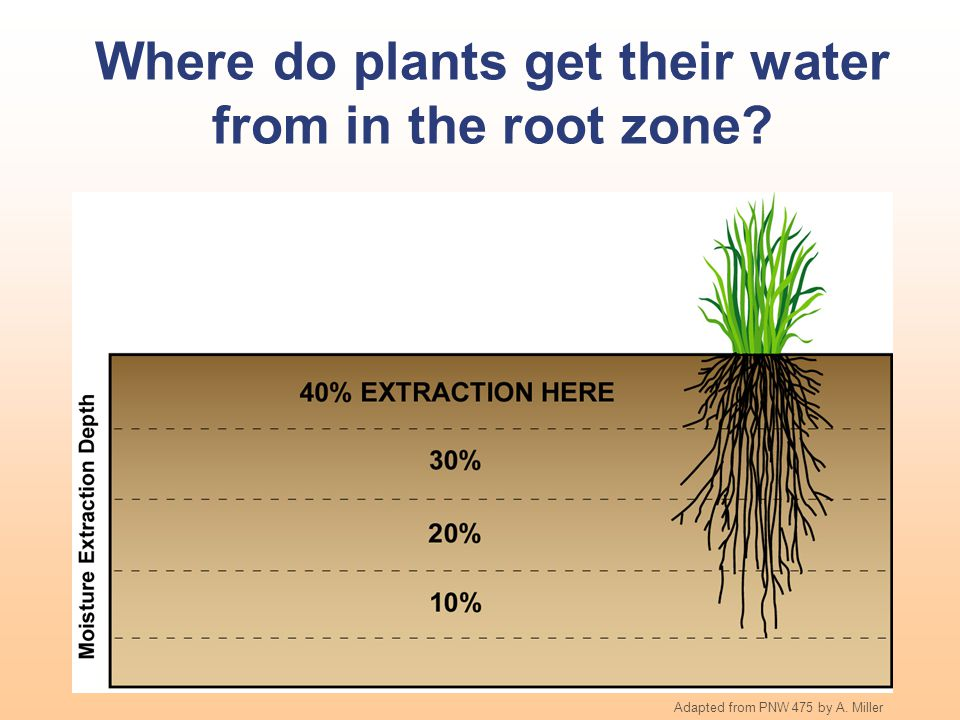 Where do plants get their water from in the root zone? Adapted from PNW 475 by A. Miller