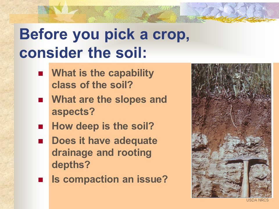 Water = 20-30% Air = 20-30% Mineral Fraction (sand, silt, clay) = 45-50% Organics = 0-5% Composition of a loam soil