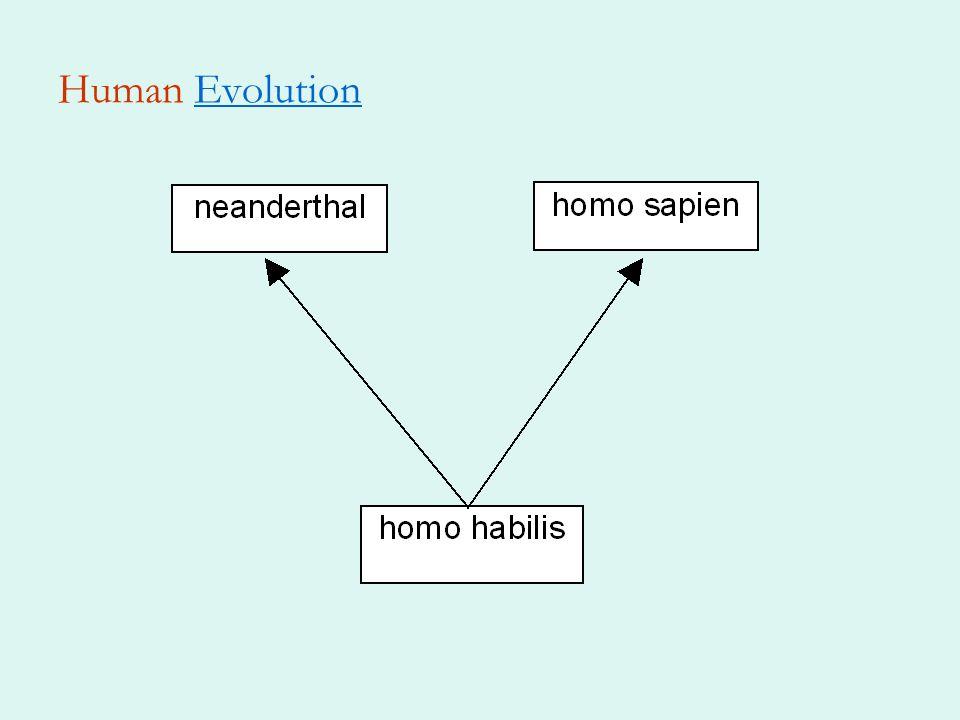 Human EvolutionEvolution