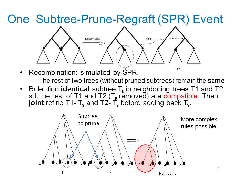 One Subtree-Prune-Regraft (SPR) Event Recombination: simulated by SPR.