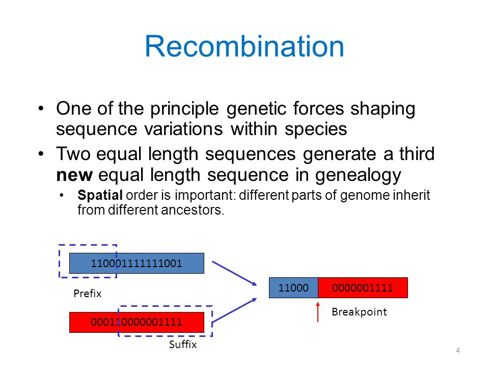 4 Recombination One of the principle genetic forces shaping sequence variations within species Two equal length sequences generate a third new equal length sequence in genealogy Spatial order is important: different parts of genome inherit from different ancestors.