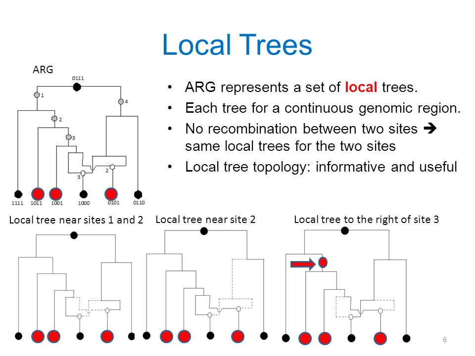 Local Trees ARG represents a set of local trees. Each tree for a continuous genomic region.