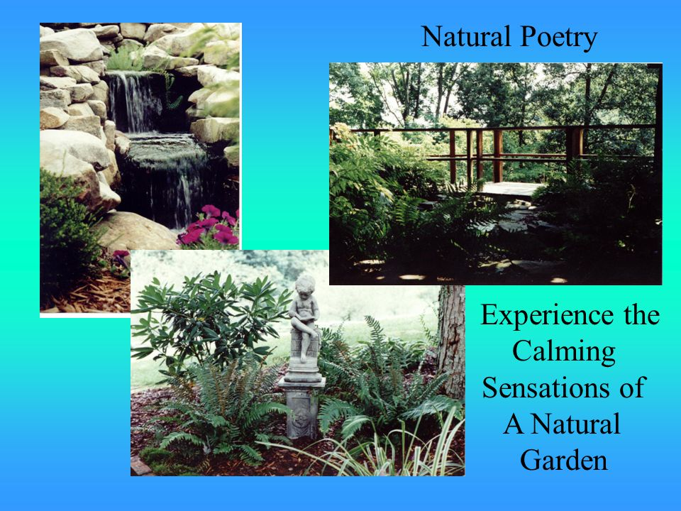 Experience the Calming Sensations of A Natural Garden Natural Poetry