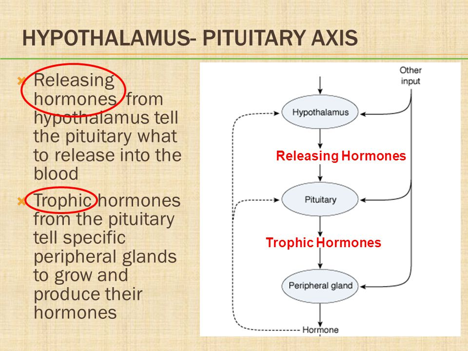 HYPOTHALAMUS- PITUITARY AXIS  Releasing hormones from hypothalamus tell the pituitary what to release into the blood  Trophic hormones from the pitu