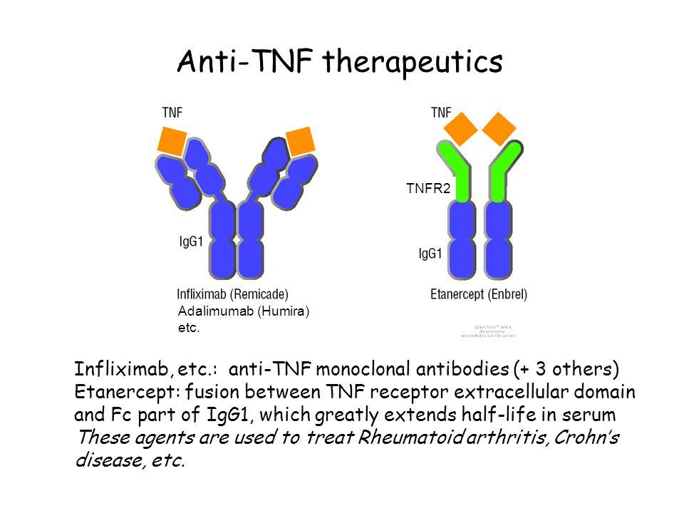Anti-TNF therapeutics Infliximab, etc.: anti-TNF monoclonal antibodies (+ 3 others) Etanercept: fusion between TNF receptor extracellular domain and F