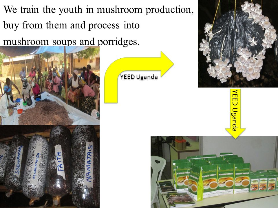 We train the youth in mushroom production, buy from them and process into mushroom soups and porridges. YEED Uganda