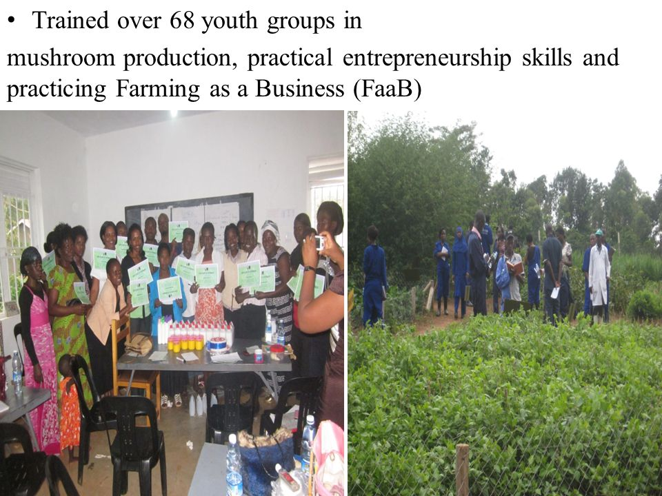 Trained over 68 youth groups in mushroom production, practical entrepreneurship skills and practicing Farming as a Business (FaaB)