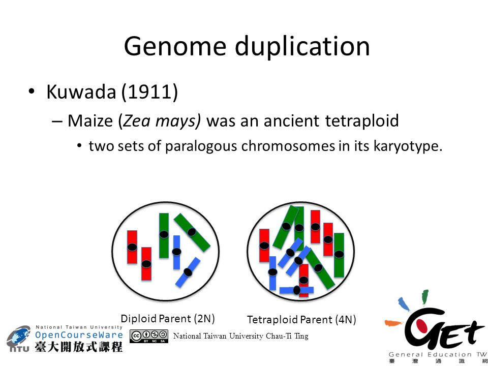 = = 2N Parent4N Parent Meiosis N Gamete 2N Gamete 3N Zygote Mating Uneven Chromosome Number National Taiwan University Chau-Ti Ting