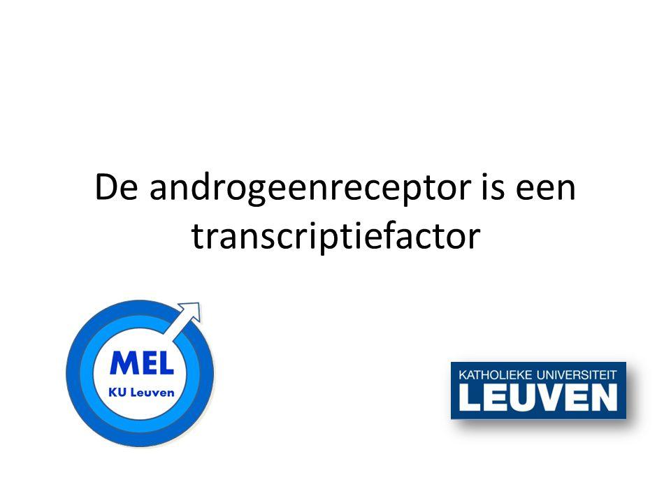 De androgeenreceptor is een transcriptiefactor